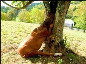 horseintree