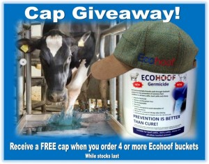 Ecohoof Offer